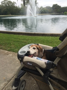 Jake in his stroller at Daffin Park
